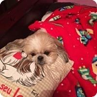 Adopt A Pet :: Louie - Windermere, FL