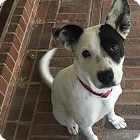 Adopt A Pet :: Kasey - Mooresville, NC