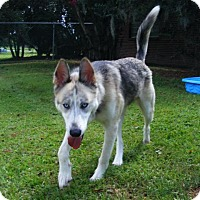 Husky Mix Dog for adoption in New Bern, North Carolina - NLOL Keri