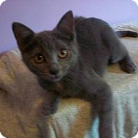 Adopt A Pet :: Sarafina - Tampa, FL