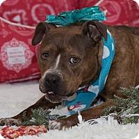 Terrier (Unknown Type, Medium) Mix Dog for adoption in Flint, Michigan - Talisha - Needs Rescue