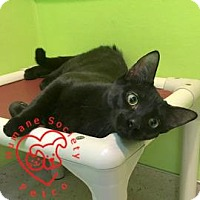 Adopt A Pet :: Licorice Whip - Janesville, WI