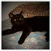 Adopt A Pet :: RIGGS - Medford, WI