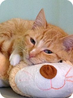 Domestic Shorthair Cat for adoption in Monroe, Georgia - Tia