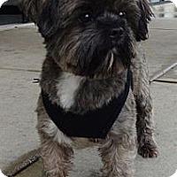 Adopt A Pet :: Jeb - Brattleboro, VT