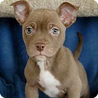Adopt A Pet :: Nico - Sacramento, CA