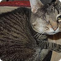 Adopt A Pet :: Iris - Medina, OH