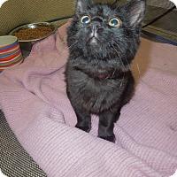 Adopt A Pet :: Connie - Medina, OH