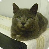 Adopt A Pet :: Mister G - Hamburg, NY