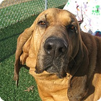 Adopt A Pet :: Ellie Mae - ADOPTION PENDING - Albany, NY