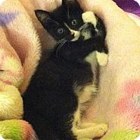 Adopt A Pet :: Cricket - Long Beach, CA