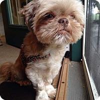 Adopt A Pet :: BUDDY pending - Eden Prairie, MN