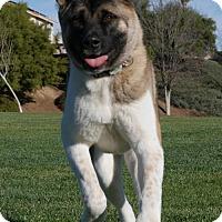 Adopt A Pet :: Duracell - Bonsall, CA