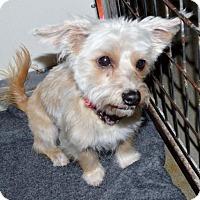 Adopt A Pet :: Terrier fem X - San Jacinto, CA