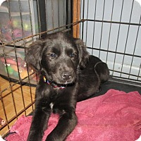 Adopt A Pet :: Kaitlyn - Rocky Mount, NC