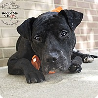 Labrador Retriever/Pit Bull Terrier Mix Dog for adoption in Mooresville, North Carolina - Ludacris