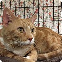 Adopt A Pet :: Rusty - Lombard, IL
