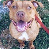 Adopt A Pet :: Chiquita - Berea, OH
