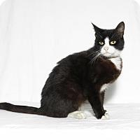 Adopt A Pet :: Loki - Lufkin, TX