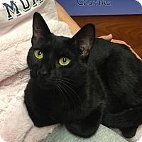 Adopt A Pet :: Mitzi - Whitehall, PA