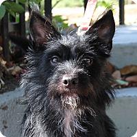 Adopt A Pet :: Raisin - Los Angeles, CA