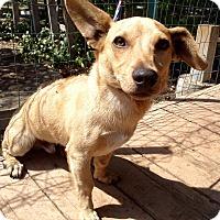 Adopt A Pet :: Fender - Santa Ana, CA