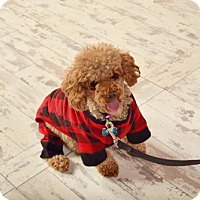 Adopt A Pet :: Cocoa PENDING - Logan, UT
