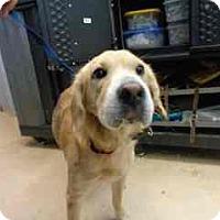 Adopt A Pet :: Jubilee - Douglasville, GA