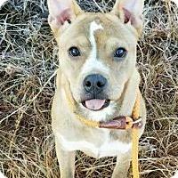 Adopt A Pet :: Buffy (URGENT) - Allentown, NJ
