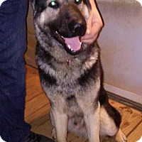 Adopt A Pet :: Ace - Raleigh, NC