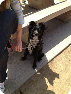 Terrier (Unknown Type, Medium) Mix Dog for adoption in North Hollywood, California - Destiny