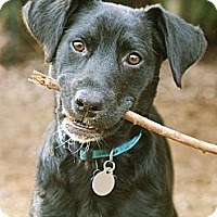 Adopt A Pet :: Jacob - Homewood, AL