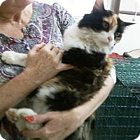 Adopt A Pet :: Jerry - Chesterland, OH