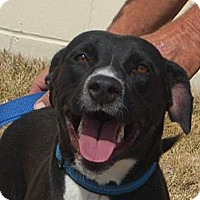 Adopt A Pet :: Taylor - Windsor, MO