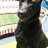 Adopt A Pet :: Holiday - Wytheville, VA
