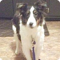 Adopt A Pet :: Lucy - Circle Pines, MN