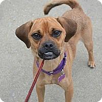 Adopt A Pet :: Murphy ~ Adoption Pending - Youngstown, OH