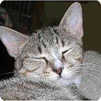Adopt A Pet :: Cutie - Lombard, IL
