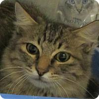 Adopt A Pet :: Aladin - Gilbert, AZ