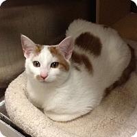 Adopt A Pet :: Trick - Colmar, PA