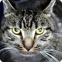 Adopt A Pet :: Adam - New York, NY