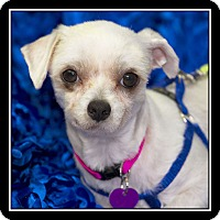 Adopt A Pet :: OBIE - San Diego, CA