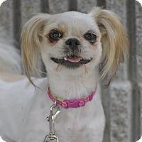 Adopt A Pet :: Maddie - Meridian, ID