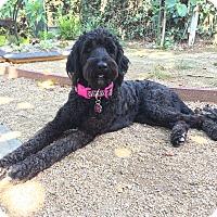 Adopt A Pet :: Cleo - Buena Park, CA