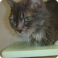 Adopt A Pet :: Mystique - Hamburg, NY