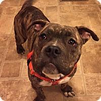 Adopt A Pet :: Buster - Newtown, CT