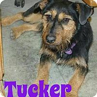 Adopt A Pet :: Tucker - Garden City, MI