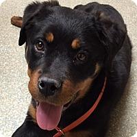 Adopt A Pet :: Zara - Irmo, SC