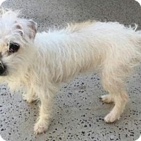 Adopt A Pet :: Princess - Brattleboro, VT