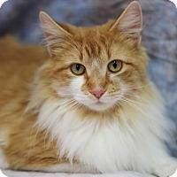 Adopt A Pet :: Galient - Midland, MI